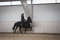 Malin with her new gelding - what amazing tölt and form