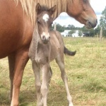 Elja with her lovely foal