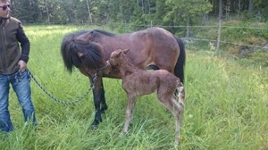 Proud and caring mother Álaborg with her newborn daughter