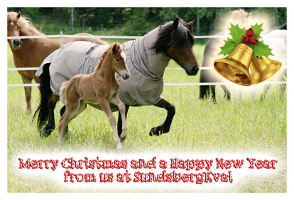 Ísar-daughter Árdis från SundsbergKval and mother Álaborg frá Feti are the models for this years Christmas card from us here at SundsbergKval breeding!
