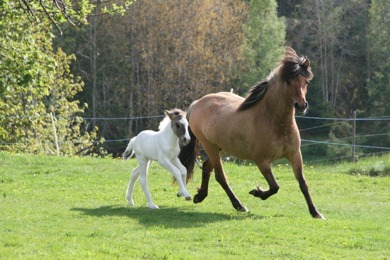 Past breeding mares and offspring