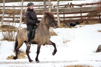 Keilir is doing well in his training so far, with Ingeborg