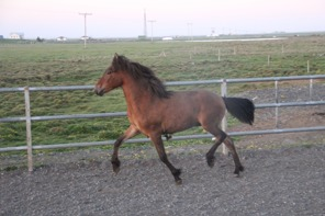 Vigur showing great movements
