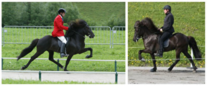 Viktor and Katla - two black beauties with an amazing tölt and gallop! (picture of Viktor is borrowed from hilleroedhestedyrlaeger.dk)