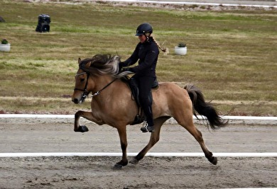 Sóllilja has both beauty and a unique riding capacity - scoring 9.5 (!) for tölt, trot, willingness and general impression/form! Picture is borrowed from Hamarsey (https://www.facebook.com/hamarsey/)