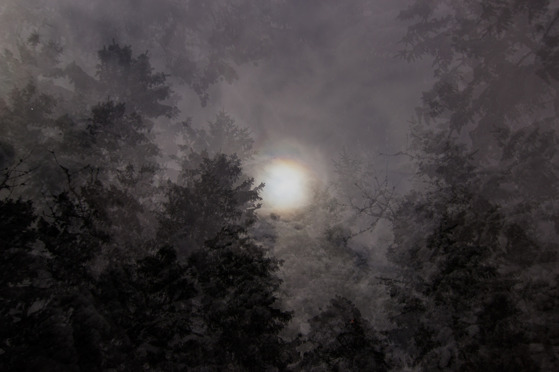 Fullmoon Winter Forest