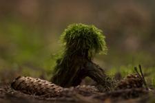 SkogsTroll