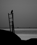 Kråkan