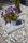 36066 Sjösingel svartvitmelerad webb