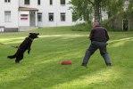 kennel träning 062