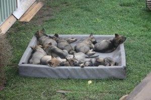 B vappisarna vilar sig iform=)