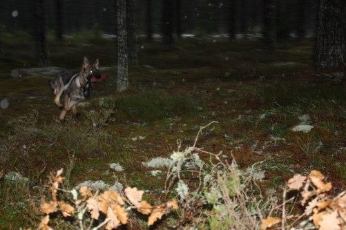 blinka titta vad jag hittade i skogen matte=)