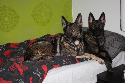 Mormor Diva och Axa i sin säng