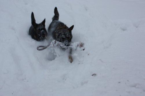 Lite djup snö var det för Axa/Diva=)