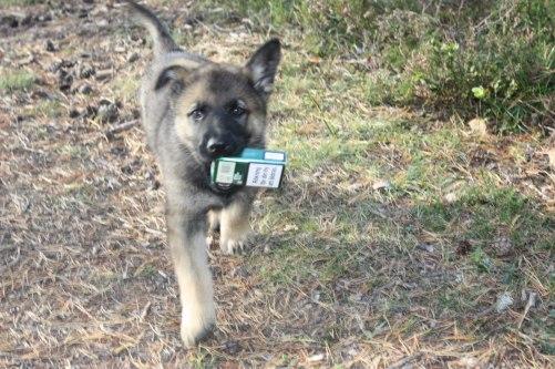Lilla Blixt hittade ett tomt cigarett paket,sorry grabben men du får inte röka=)