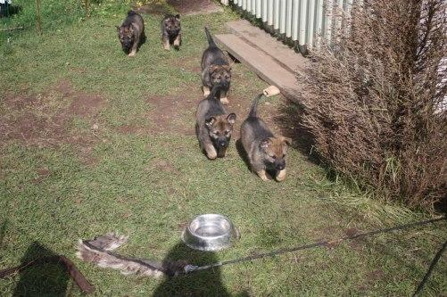 Här kommer bumbibjörnarna=)