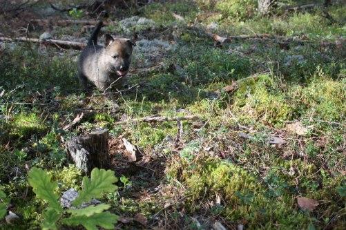 Tjolahopp vad roligt det är i skogen