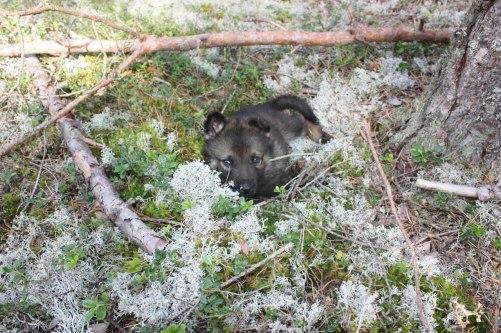 trött blir man i skogen också,tur det finns håller att sova i=)