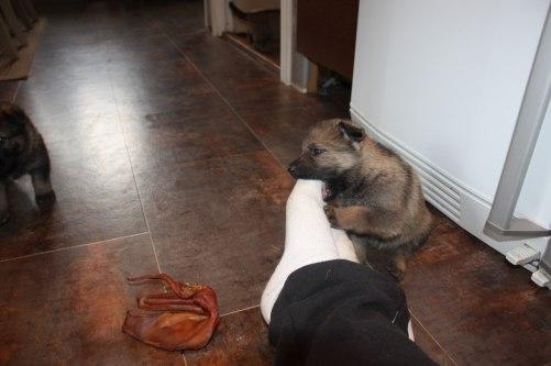 Stora foten är bättre och bita i än grisörat=)