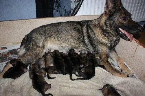 Stolt mamma diva med småttingarna