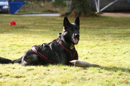 RixDivans Ali uppfl lkl spår tjänste hund stockholm