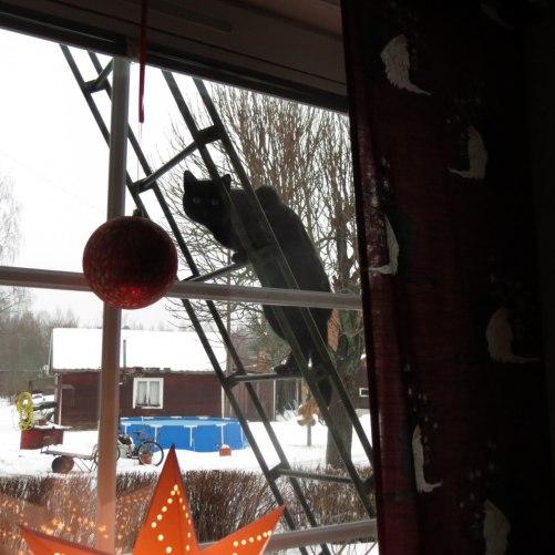 grannens katt har klättrat upp på stegen för att kolla in vappisarna som busar för fullt=)