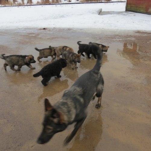 Axa visar sin halv syskon var swiminpoolen är på gårdsplanen