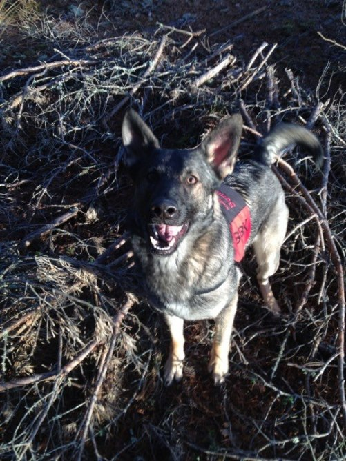 Lycklig Bonnie påväg in i skall när hon hittat figgen