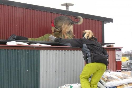 Demonens Enzo hittar figgen på taket