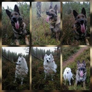 Exi och dotterns hund Kisha på dagens skogs promenad