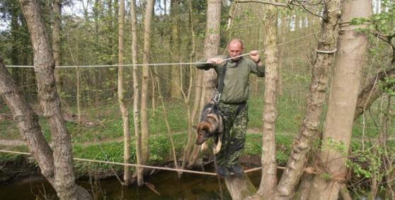 RixDivans Asko hänger snällt i husses sele när dem är på övning=)