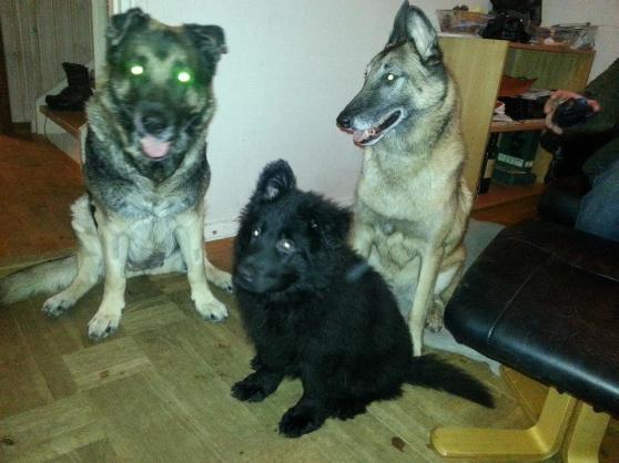 RixDivans Chac med sina två stora nya kompisar.