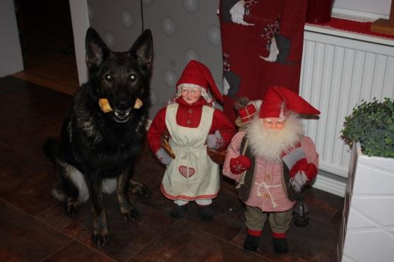 Rixi och vi på RixDivans kennel önskar er alla en riktigt God Jul och Gott Nytt År