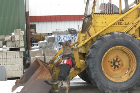 Rixi hittade busen i traktorn