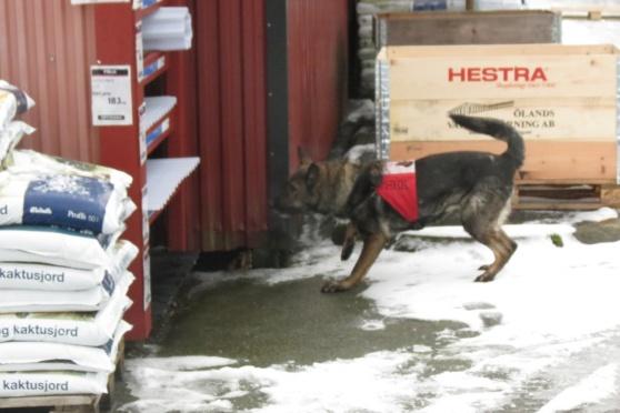 Rixi hittar en figge på hyllan