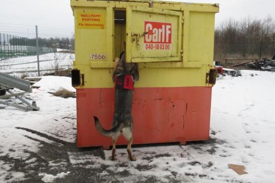 Foxy hittar också i containern