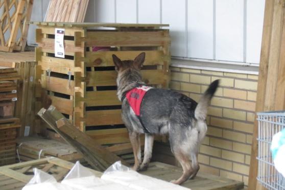 RixDivans Bizzie hittar nåt i lådan