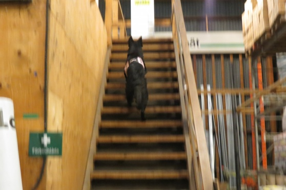 RixDivans Aqua uppför trappan finns det nån figge