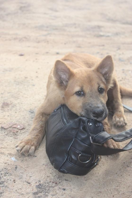 liten vappis från Thailand som vilade på min väska=)