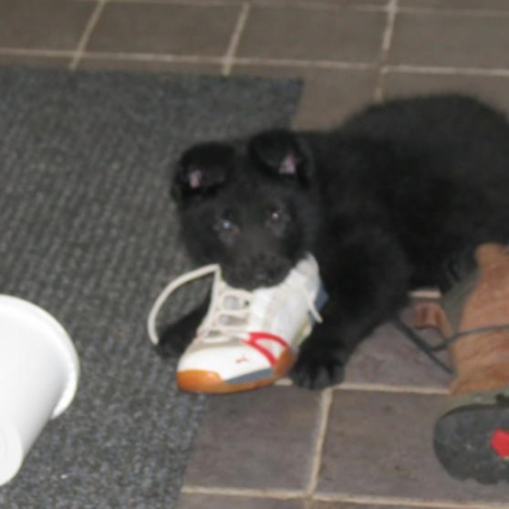 Casper älskar att tugga på skor