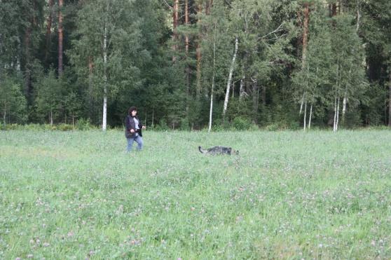 Nu har vi kommit ur skogen och ut i det höga klöver gräset!