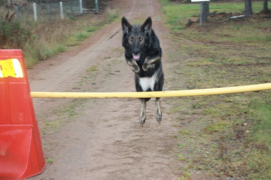 Rixi likes to jump=)
