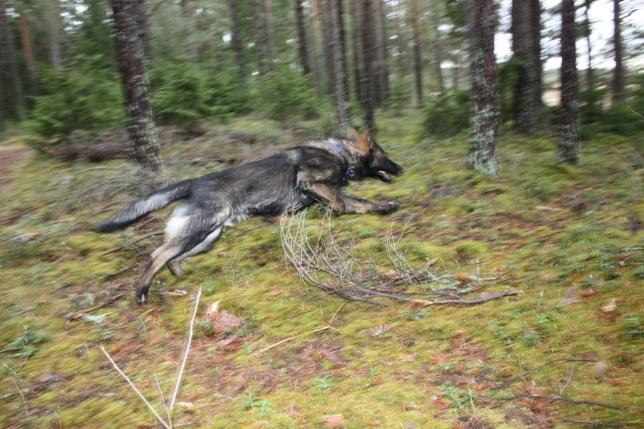 Den flygande Arko bäst att skynda sig så inte figgen försvinner=)
