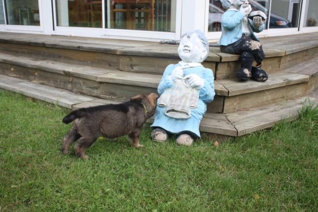 Belsebub undrar vad den kärringen gör i våran trädgård=)