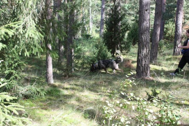 Här kommer dem igenom skogen påväg ut till ängen igen!