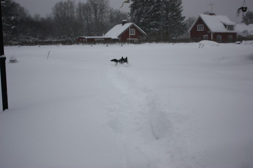 Rixi syns inte i snön