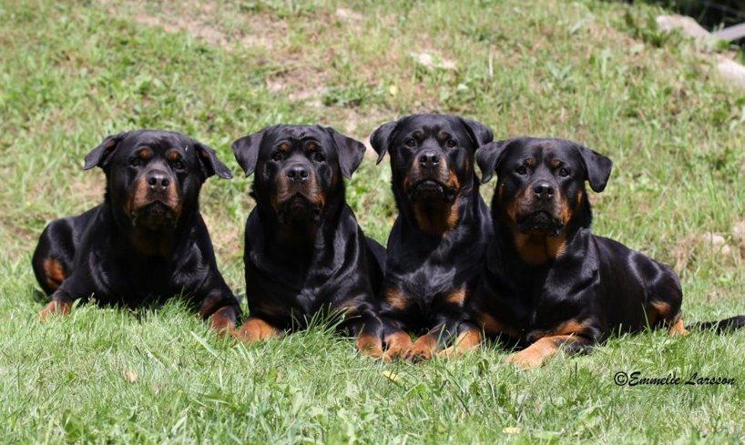Beanie, Dilla, Ambra & Cleo