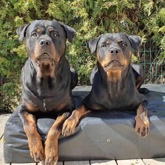 Ivan och syster Inez