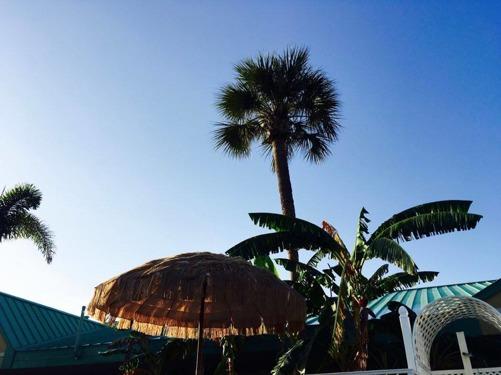 Palm kusten krok upp kan du koppla in på Twitter