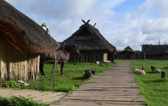 Vikingabyn vid Wolin i Polen. Där vikingatidens Jomsburg ska ha legat och Blåtands elitsoldater hört hemma.